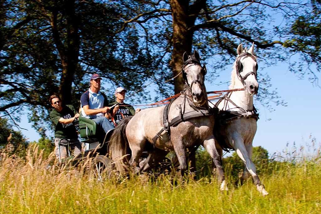 paardenmennen | bedrijfsuitjes in twente 1
