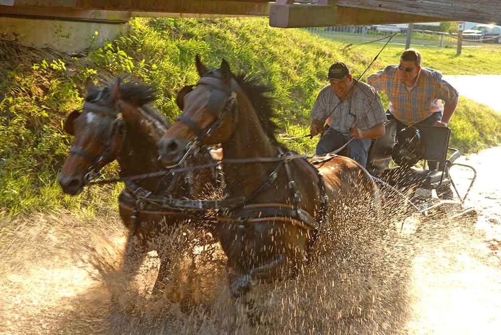 paardenmennen | bedrijfsuitjes in twente 2
